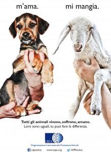 Campagna per dire no alla mattanza degli agnellini nel periodo di pasqua - oipa pistoia