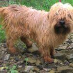 Arto - adozione cane taglia piccola pistoia