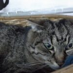 adozione gatti pistoia