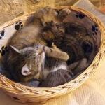 adozione gattini pistoia