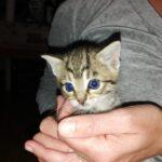 Flocky - gattino maschio